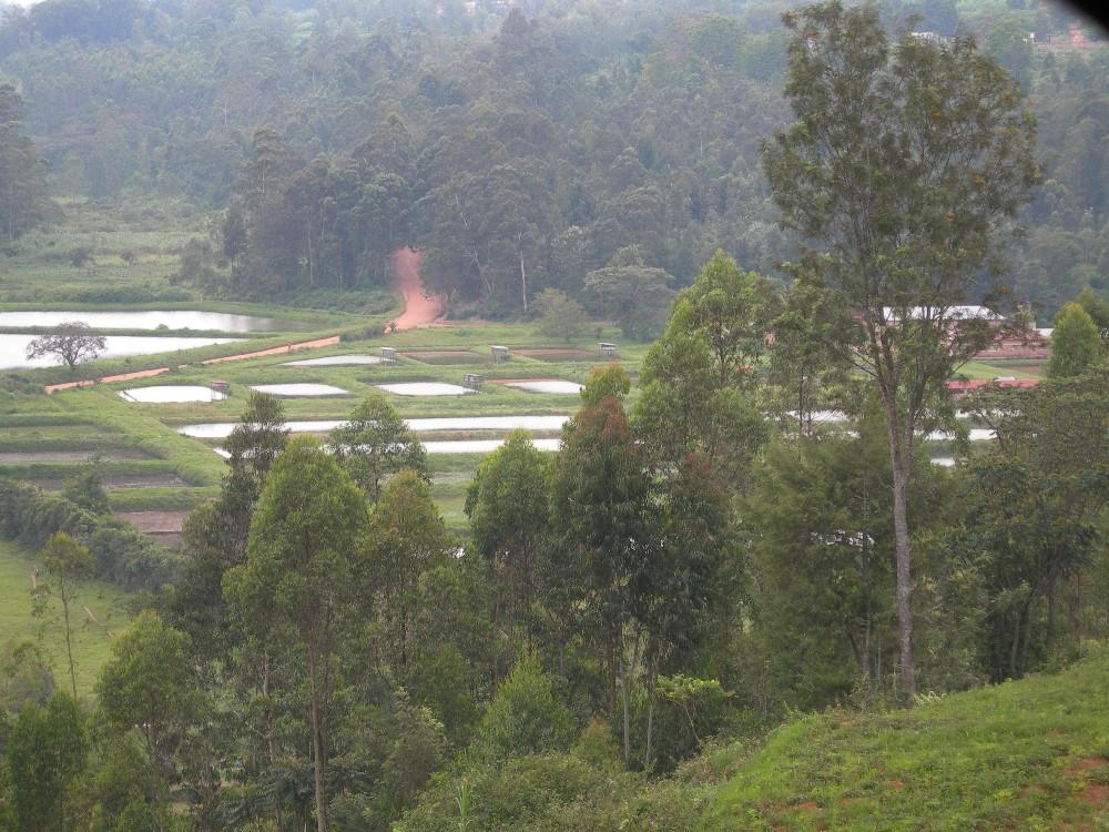 Site rencontre rwanda